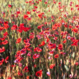 a summer full of poppies van Hannes Cmarits