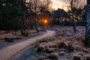 Folgen Sie der Sonne von Joran Quinten
