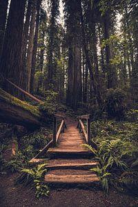 Ingang tot het woud van de reuzen