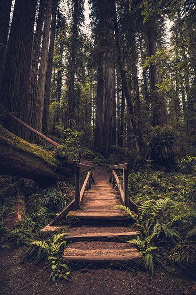 Ingang tot het woud van de reuzen van Joris Pannemans - Loris Photography