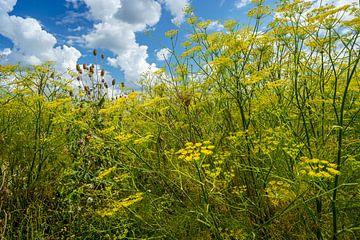 landwirtschaftliche Naturverwaltung von Eugene Winthagen