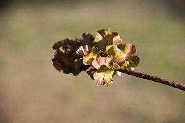 Uitgebloeide bloem wordt kunstobject van whmpictures .com