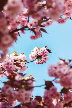 Blüte von Veri Gutte