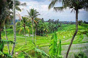 Bali rijstvelden van