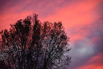 Prachtige lucht door boom. van Mandy M