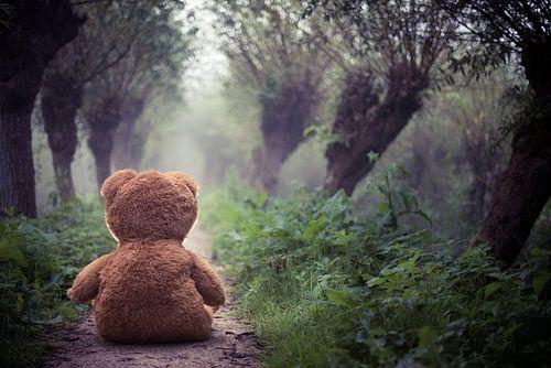 Teddy in the mist von Vincent van Dam
