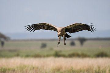 Vulture van Robert Styppa