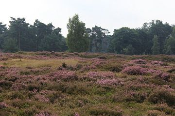 Heide landschap in Nederland van michael meijer