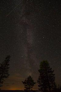 Nachtlucht