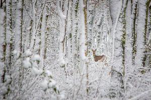 Ree in winters bos (kleur)