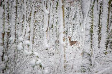 Hirsch im Winterwald (Farbe) von Martzen Fotografie