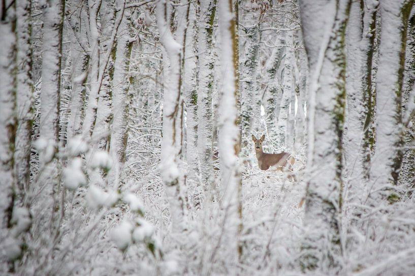 Ree in winters bos (kleur) van Martzen Fotografie