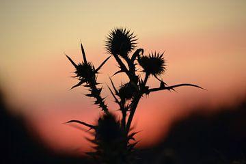 Sonnenuntergang in der Natur von Tamara Van luik