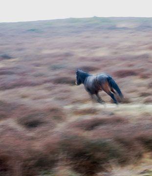 Paard in galop van Norbert Erinkveld