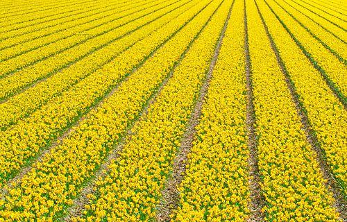 Narcissusfield van