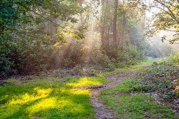 Zonnestralen in het bos van Ruud Morijn