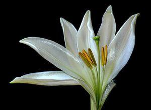 eleganz in weiß