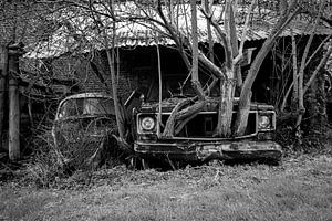 Baum wächst mit dem Auto