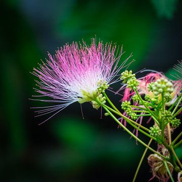 Mooie roze gekleurde bloem van Jayzon Photo