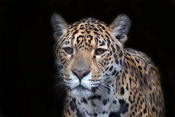 Jaguar mit schwarzem Hintergrund von Maurice de vries