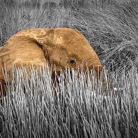 Olifant in moeras landschap van Chris Stenger