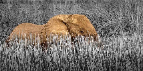 Olifant in moeras landschap van