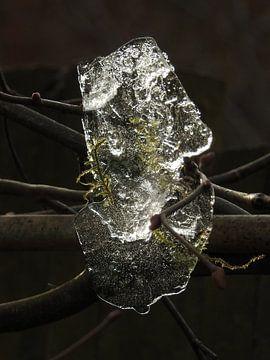 IJs in de boom van Fotografie Sybrandy
