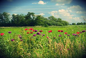Bank of Poppies (Intens Color)