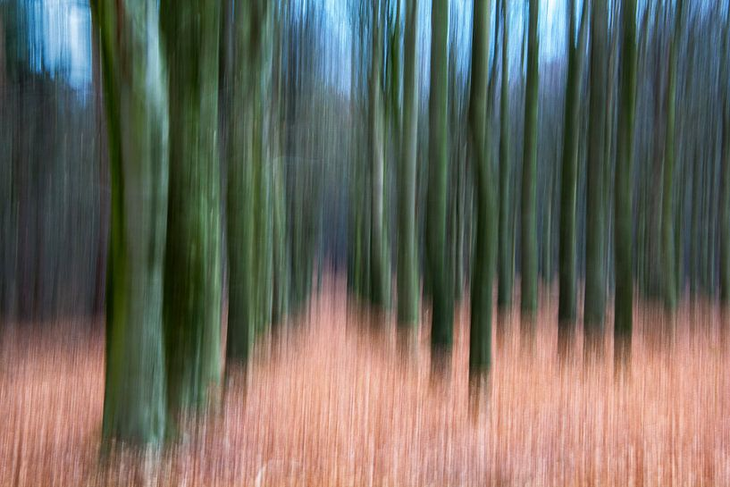 Abstract forest van Joost Lagerweij