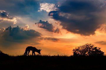 coucher du soleil sur Pim Leijen