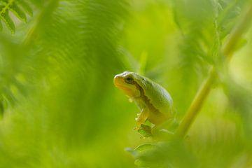 Baumfrosch in grün von Marianne Jonkman