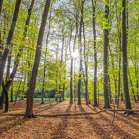 Lente bos op Texel / Spring Forest on Texel von Justin Sinner Pictures ( Fotograaf op Texel)