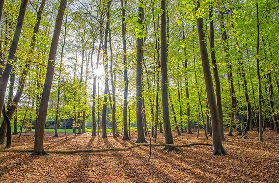 Lente bos op Texel / Spring Forest on Texel van Justin Sinner Pictures ( Fotograaf op Texel)
