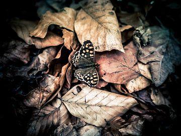 Herfstvlinder van Harry Bouman