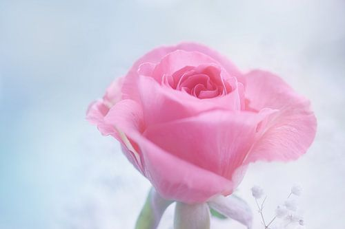 Pink 'n Blue van LHJB Photography