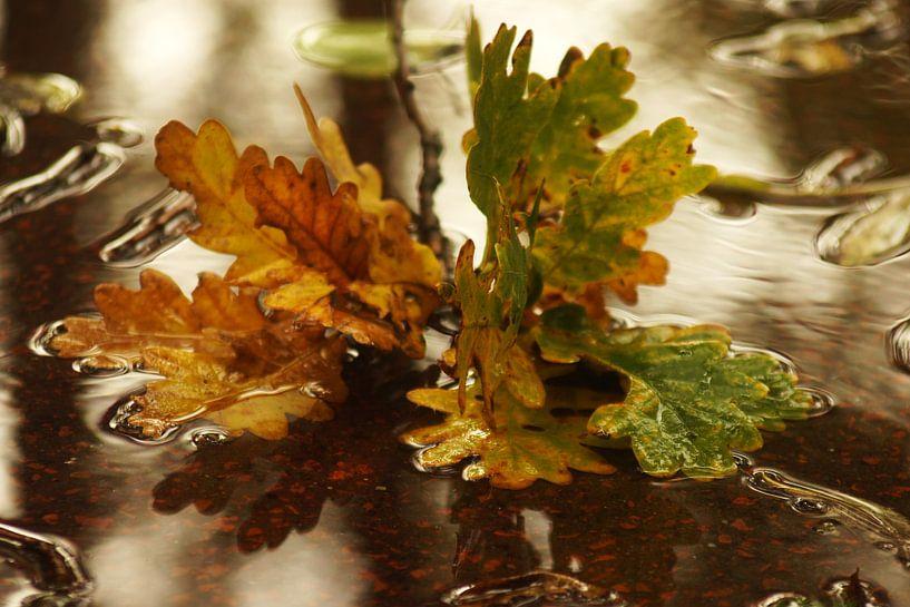 autumn leaves van Dirk van Egmond