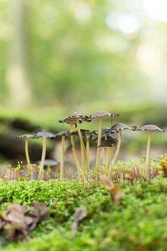 Autumn - Zwarte paddestoelen in het groen  van Chantal Cornet