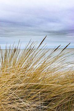 Duingras aan het strand van Sharon Hendriks