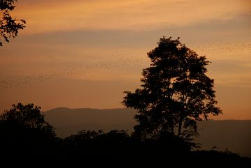 Vleermuizen bij zonsondergang van MM Imageworks