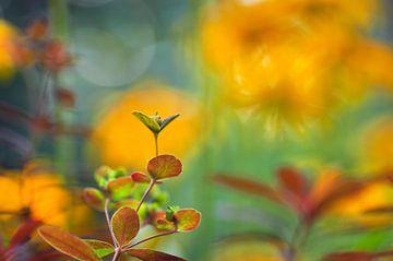 Euphorbia sur Corinne Welp