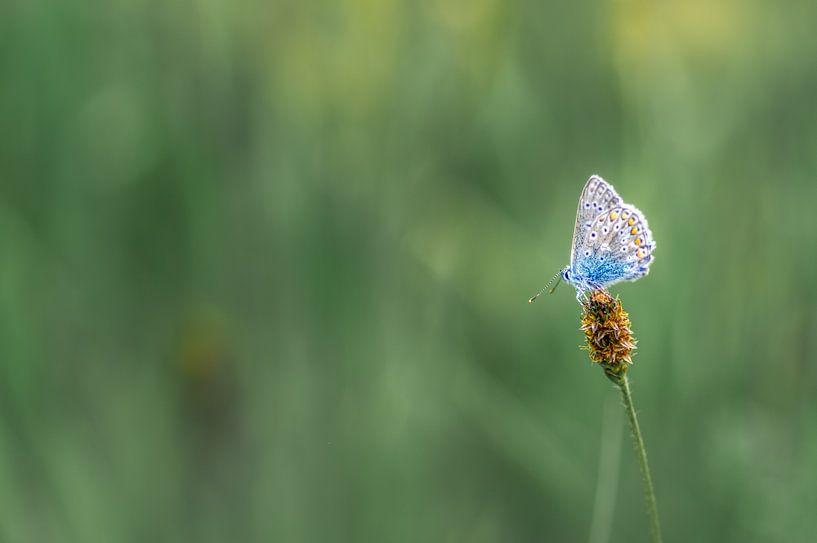 The beauty of nature van Klaas Fidom
