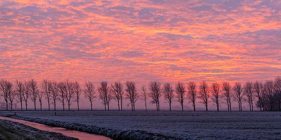 Een bomenrij in zonsondergang van Menno Schaefer