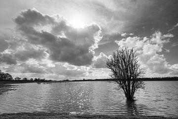 Biesbosch in zwart-wit van