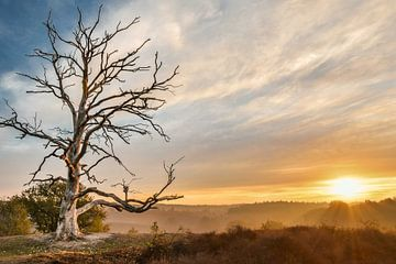 toter Baum auf der Posbank von Jeroen Mondria