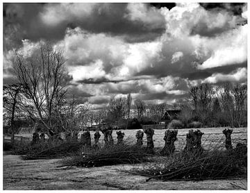 Die Weiden sind gebündelt. Foto in Schwarzweiß von Mariska Asmus