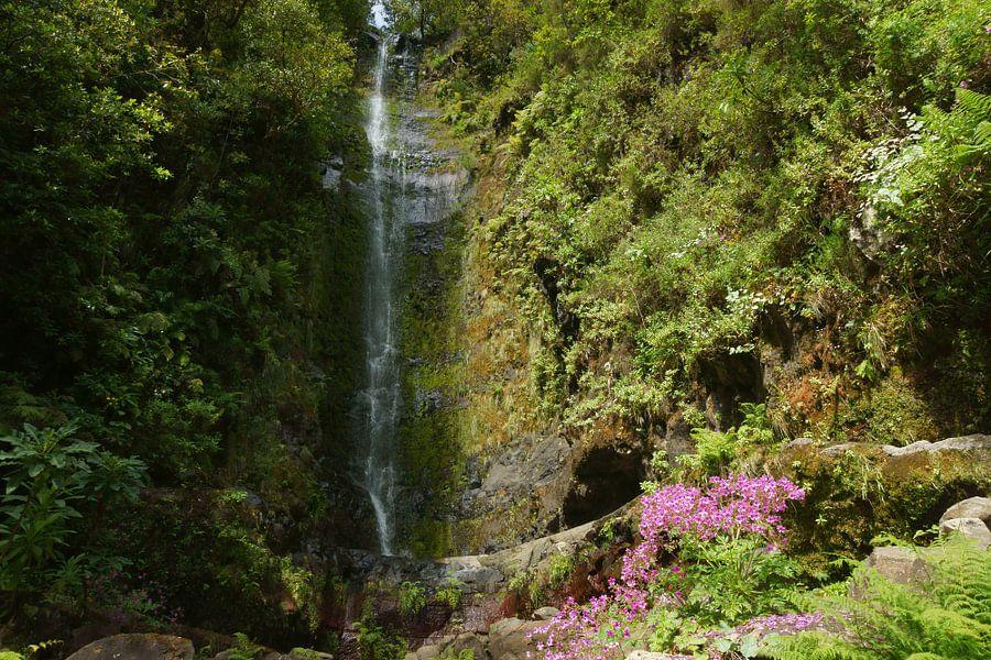 Waterval en roze bloemen