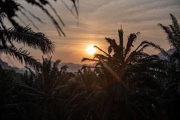 Sonnenuntergang bei den Palmen in Indien von Sander de jong