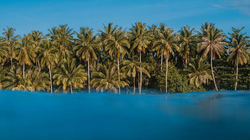 Île tropicale sur Andy Troy