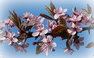 Roze bloesem - Voorjaar von Fotografie Sybrandy