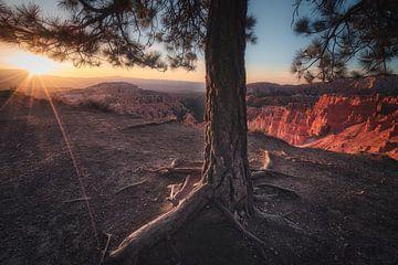 Die Berührung der Sonne von Joris Pannemans - Loris Photography
